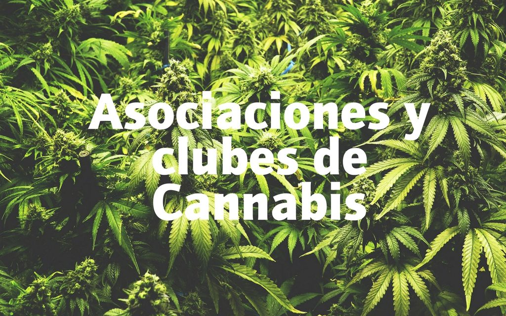 clubes cannabis ninemilesseeds